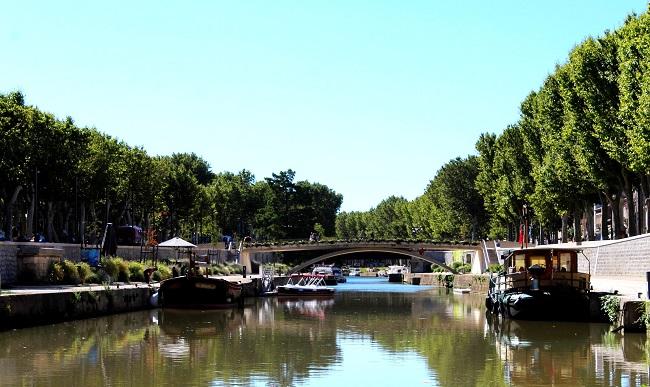 Les platanes bordant le canal du Midi