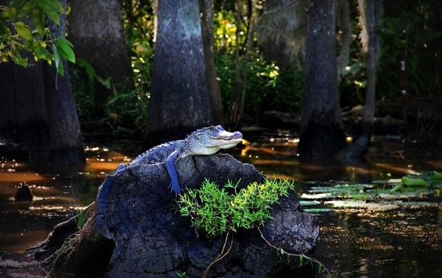 Le Marais du Bayou en Louisiane